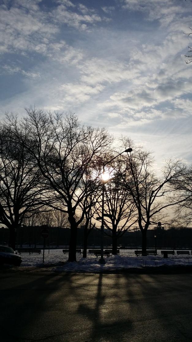 Sunbathed Trees