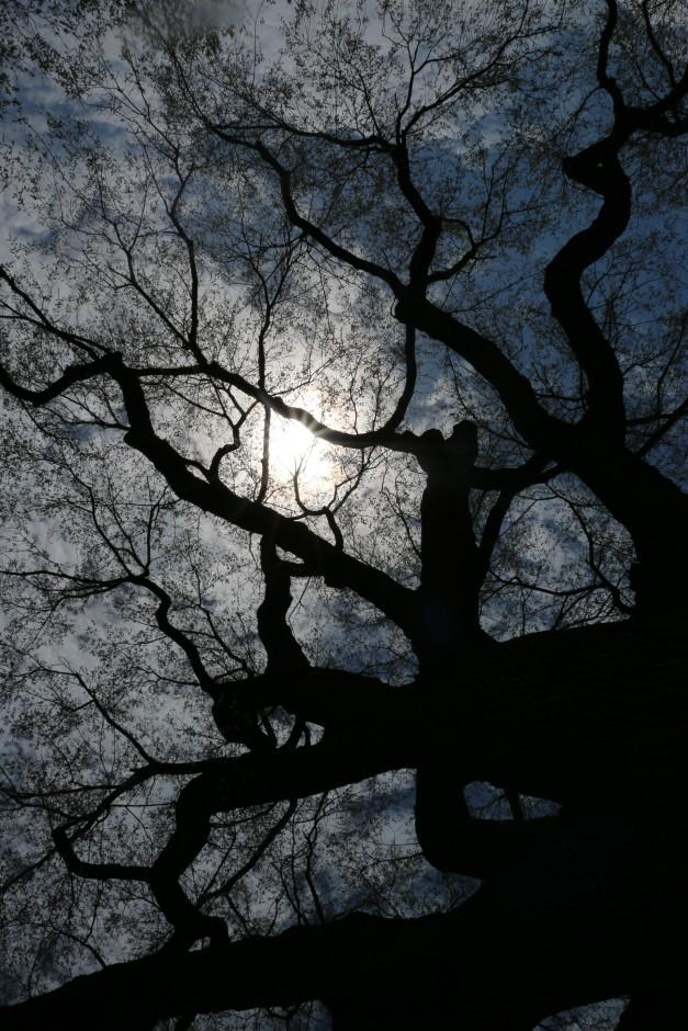 Sun Thru The Branches