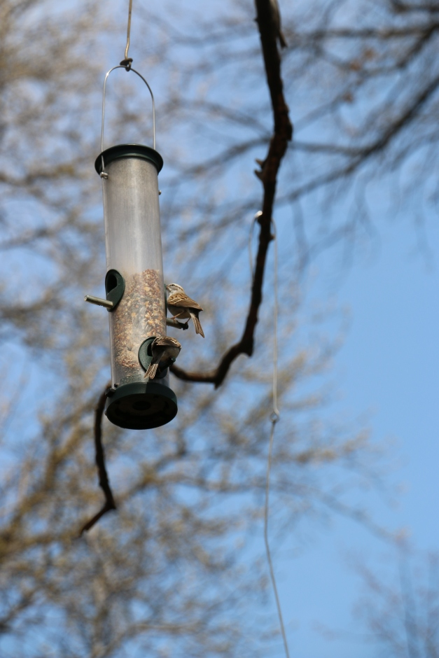 Bird in feeder