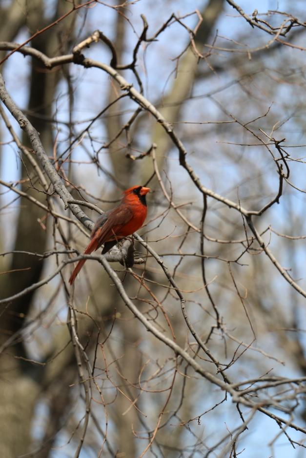 Redbird Profile