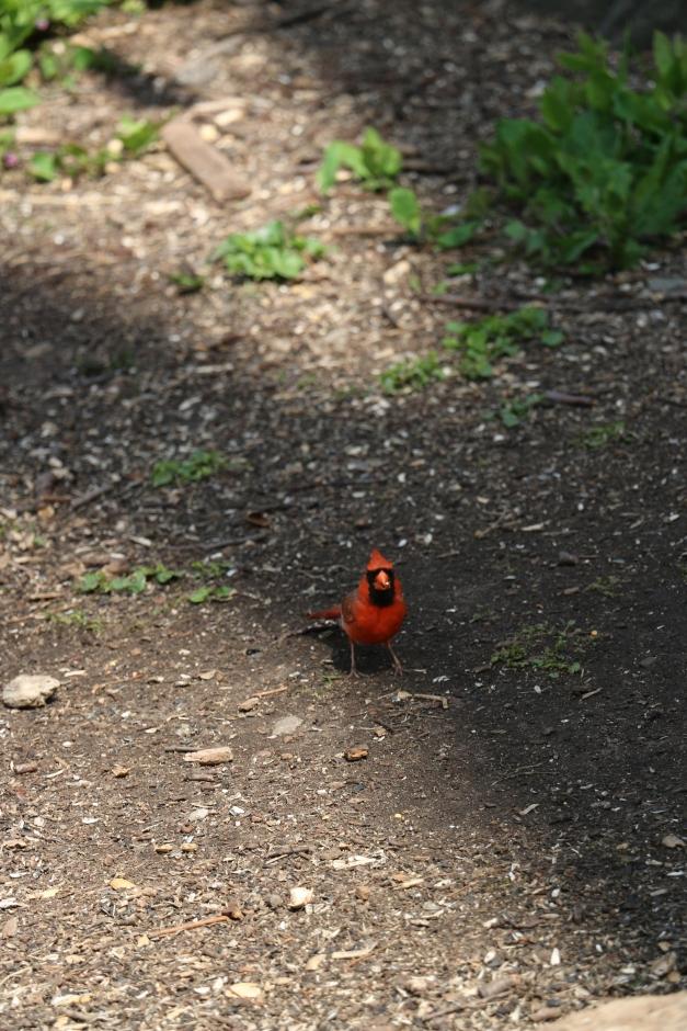 Redbird Front