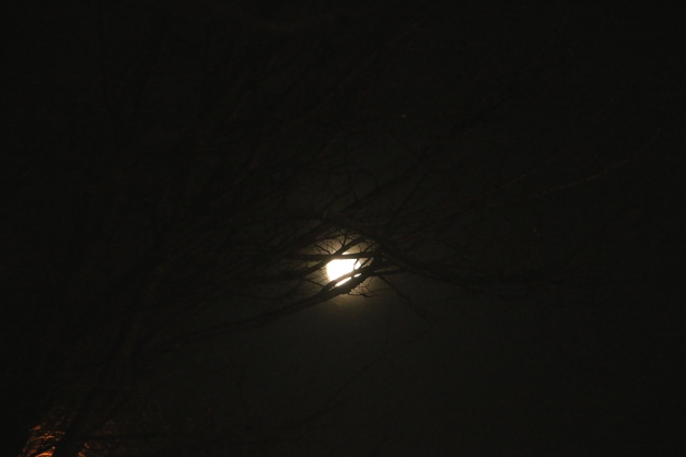 Moon Thru the Branches
