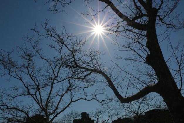 Perfect Sun & Trees
