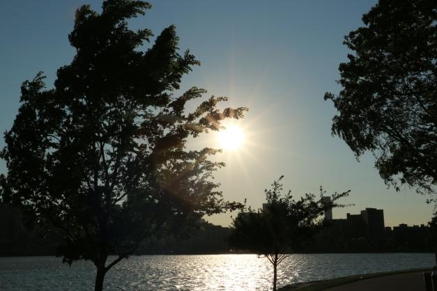 Tree Limb Grips The Sun