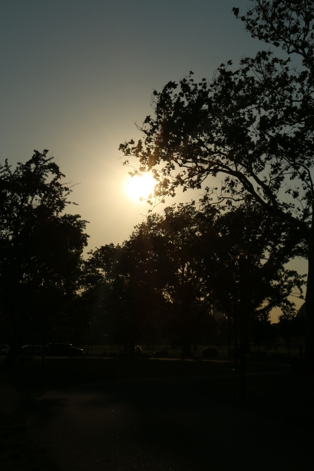 Sun Gripped Tree 4