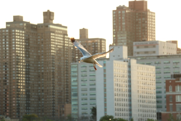 Bird of Prey 5