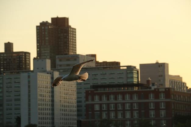 Bird of Prey 3