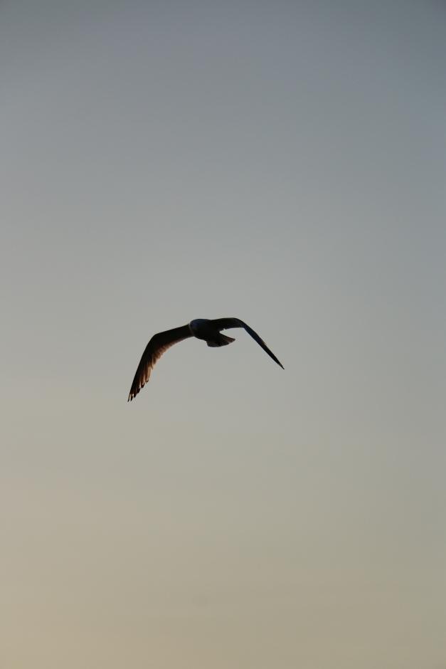Look The bird of Prey is arriving.