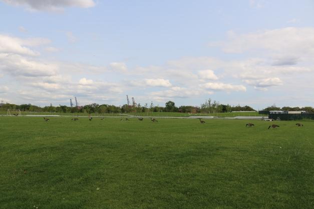 Field Expanse