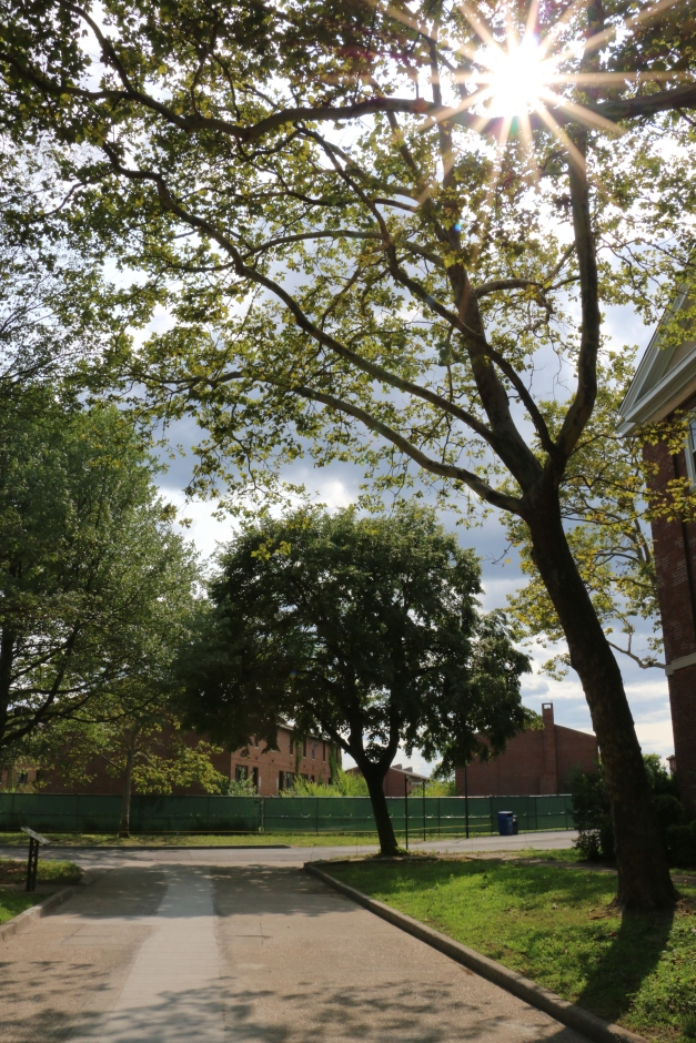 Trees & Sunlight