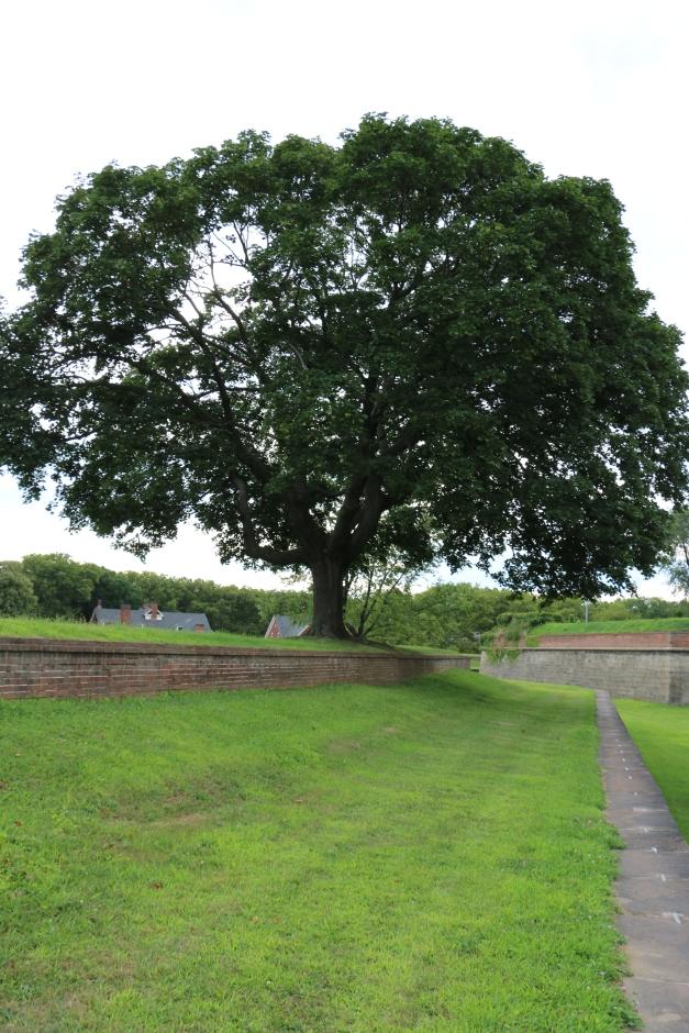 Tree in Near Distance