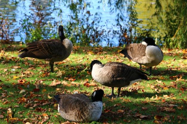 Bird Grouping
