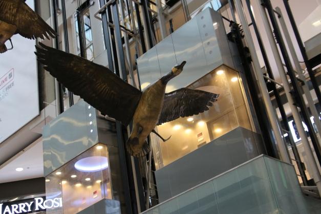 Bird Above