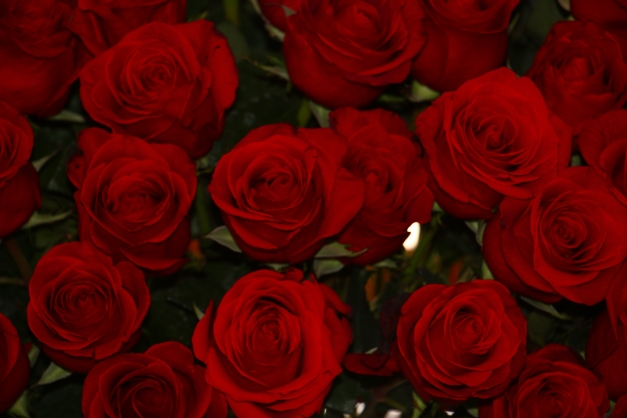 Roses for Mother Manuela