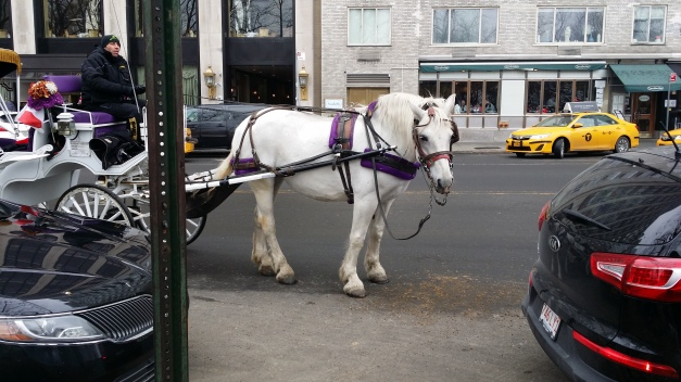 Horse & Carriage 2
