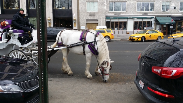 NYC Horse & Carriage