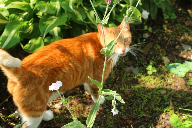 Cinnamon In The Garden